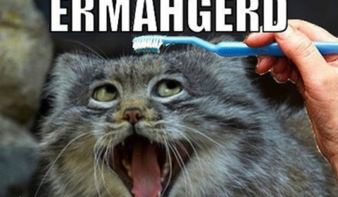 ermahgerd-toothbrush-cat-1260-620x413